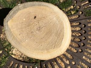 Sauvez le dernier arbre du Quartier de l'Horloge !