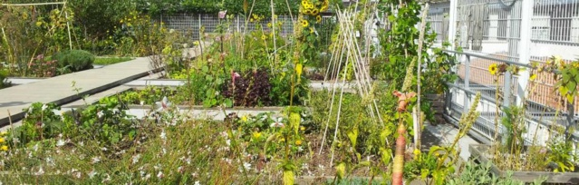 Le jardin partagé sur le toit du gymnase des Vignoles, Paris 20e